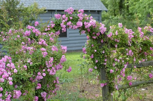 America's Rose Garden