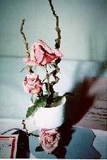 Creating Arrangements Using Miniature Roses