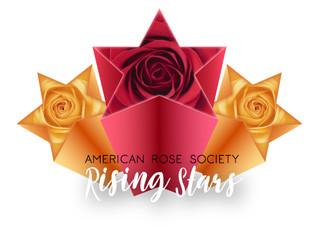 Rising Stars Award