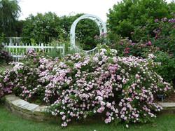 11-10a-14-Rosa_'Petite_Pink_Scotch'_Birmingham_Botanical_Gardens