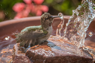 Fountains: A Big Attraction