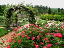 2nd 10c_Fran Brooks-Rose Garden at Biltmore Estate, Asheville, NC