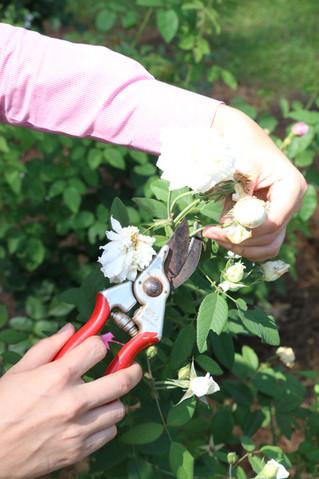 Basic Pruning Principles