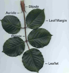 About Leaves!