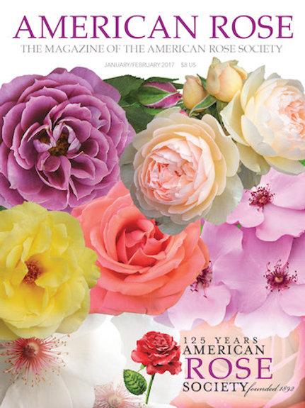 2017 January/February American Rose