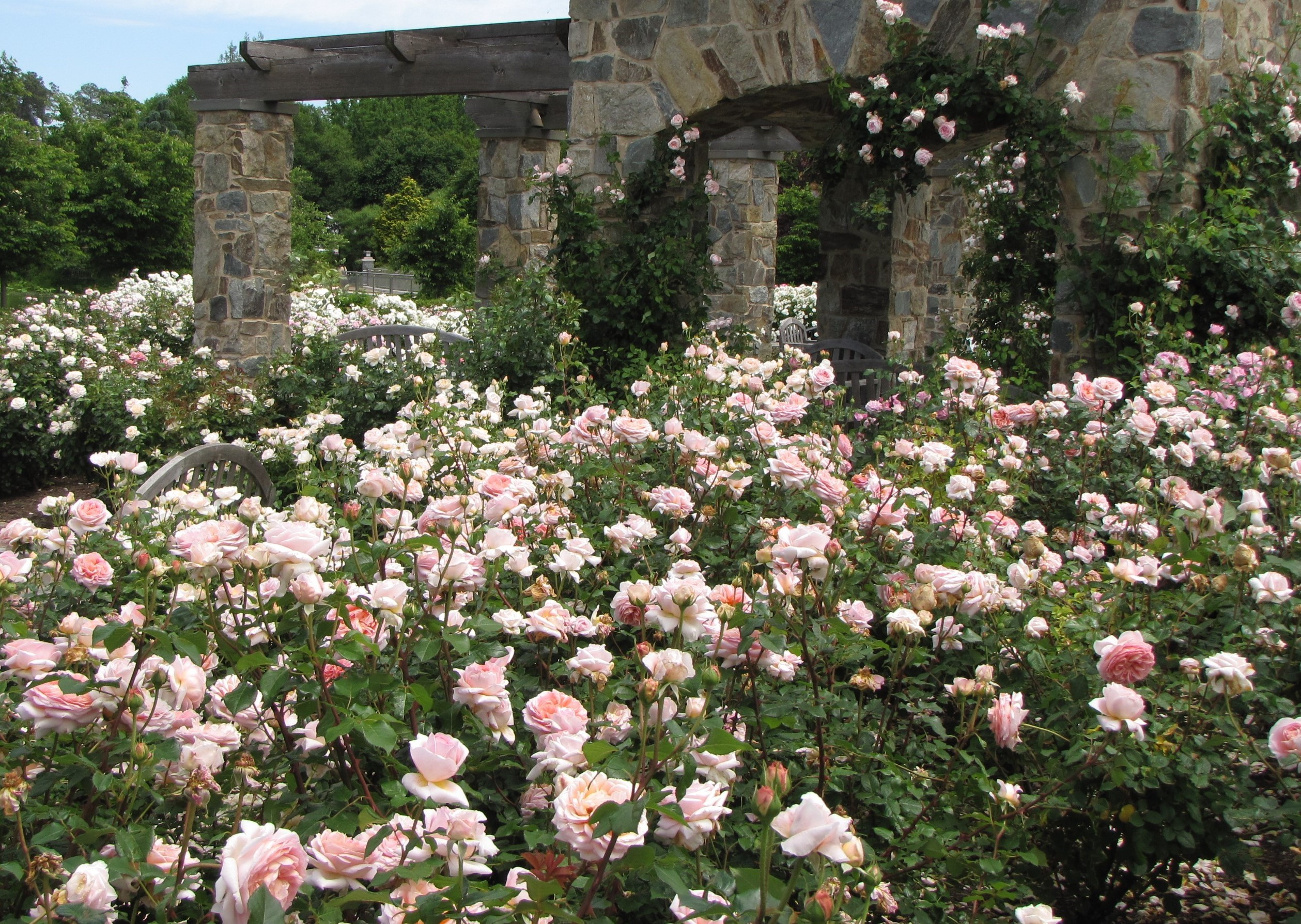 Class 11-Lewis Ginter Rose Garden & Pergola - Pam Powers