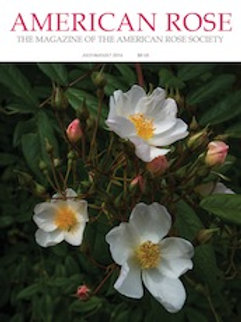 2016 July/August American Rose