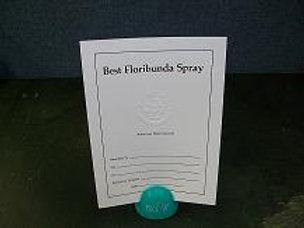 Floribunda Spray