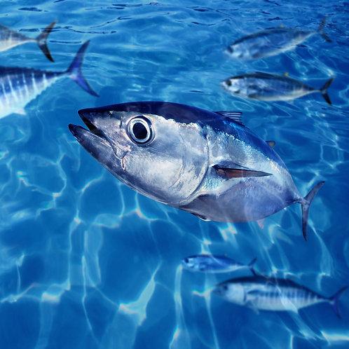 Tuna Sponsor