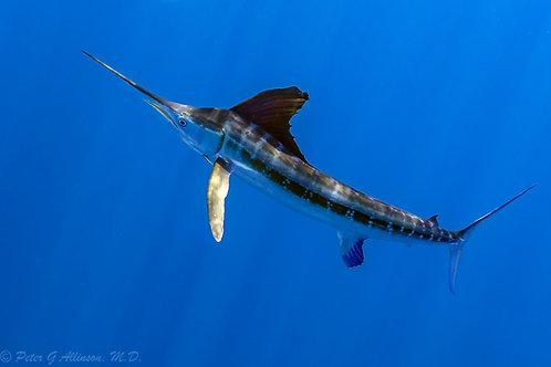 Marlin Title Sponsor