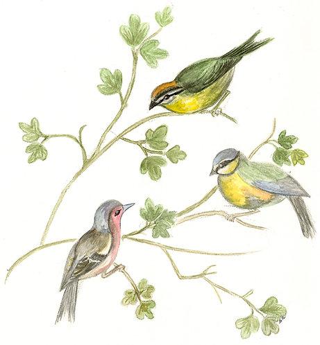 Lot de 5 cartes simples trois oiseaux