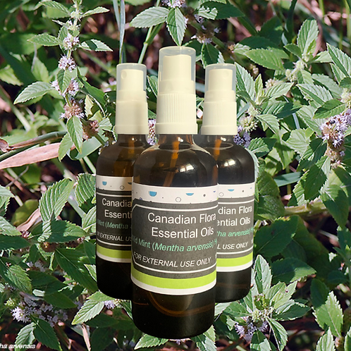 Wild Mint (Mentha arvensis) Hydrosol 100ml