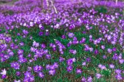 Flores no caminho_Vale do Pati