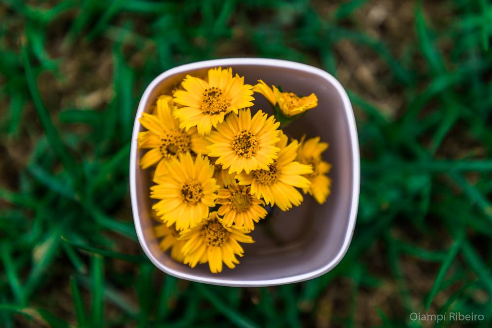 Flores_Salvador
