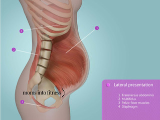 Your Transversus Abdominus (TrA) During Pregnancy - Pulse Physiotherapy and Pilates