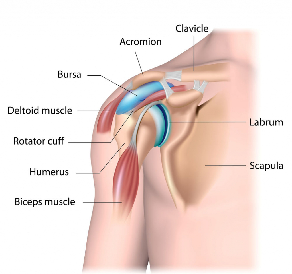 What is Bursitis | Pulse Physiotherapy and Pilates | Brisbane