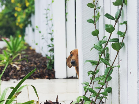 Why Landscaping Is Important For Your Home's Value
