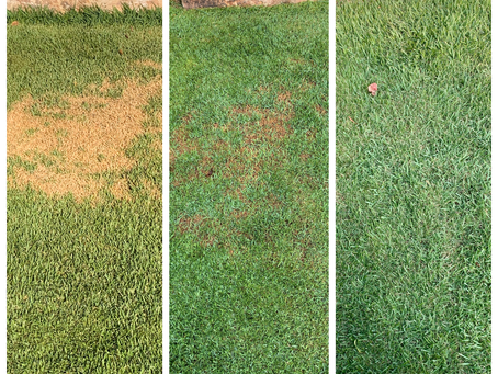 Do These 3 Things To Treat Lawn Grub Infestation