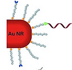 A Self Reporting Tetrazole Based Linker for the Biofunctionalization of Gold Nanorods