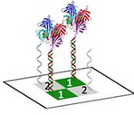 Photo‐Induced Click Chemistry for DNA Surface Structuring via Direct Laser Writing