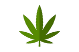 cannabis_cm-no background.png