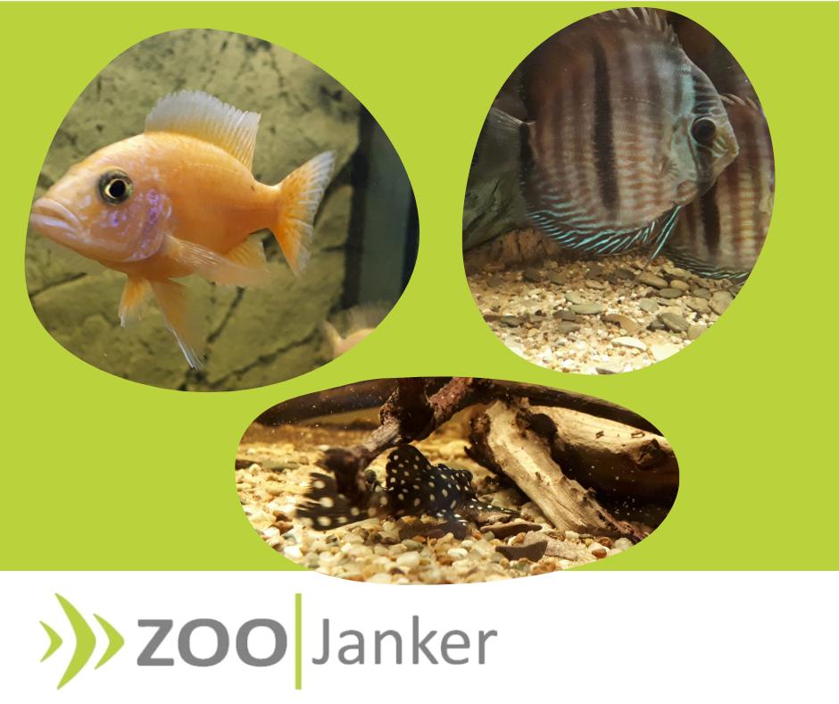 Facebook Beitrag Zoo Janker