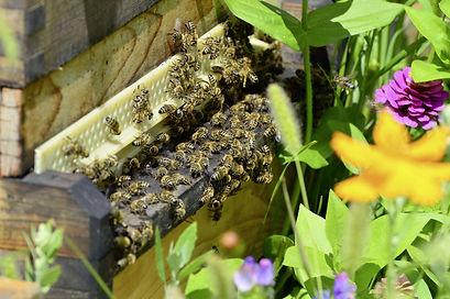 Bee hive Mornington Peninsula