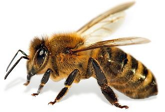 Beekeeping Mornington