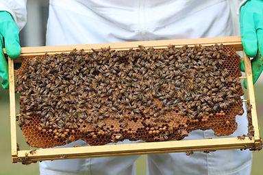 Beekeeping Mornington Peninsula