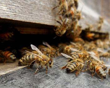Bee Keeping Mornington Peninsula