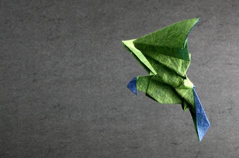 Parrot-Bleu-green-IMG_0080-by-Nicolas-TERRY.jpg