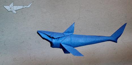 Shark - Shapping challenge