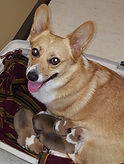 Roz & her babies.jpg