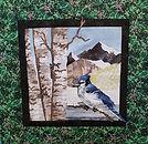 December Blue Jay.jpg