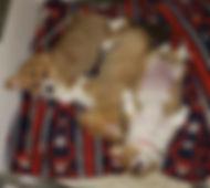 3 babies left.jpg