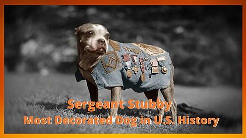Sergeant Stubby Article