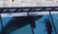 Screen Shot 2019-09-23 at 3.08.28 PM.png