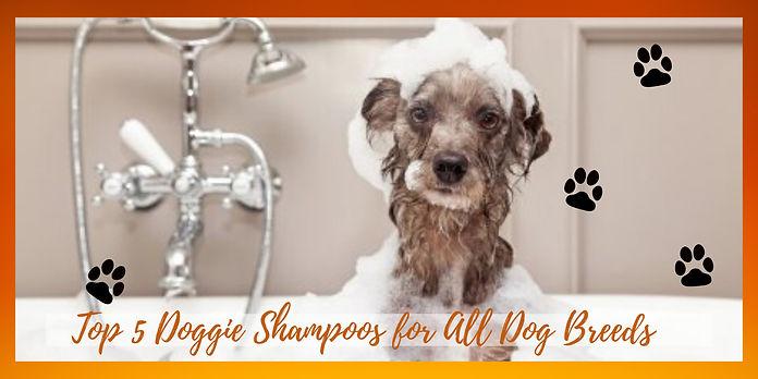 Top 5 Doggie Shampoo for all Dog Breeds