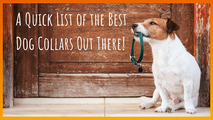A quick list of the best dog Collars out
