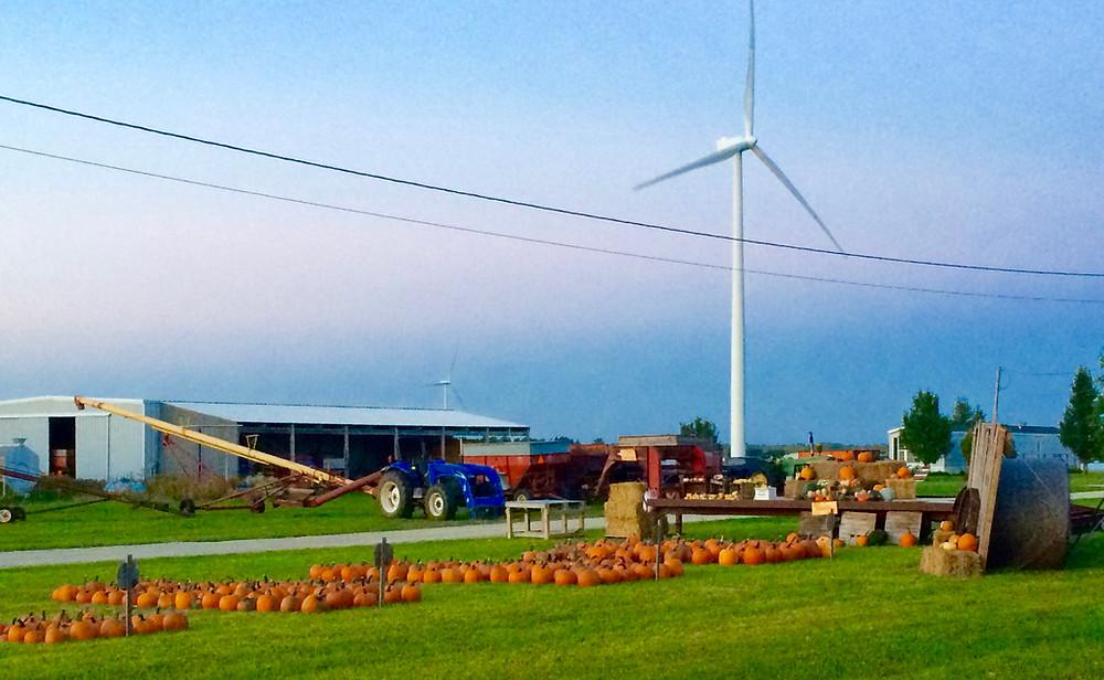 Pumpkin Patch at the Klink Farm in Garden, MI on the Garden Peninsula in Michigan's U.P.