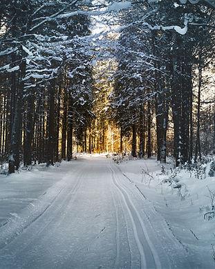 cross-country-skiing-2065439_1920.jpg