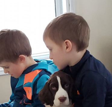 English Springer Spaniel with his kids