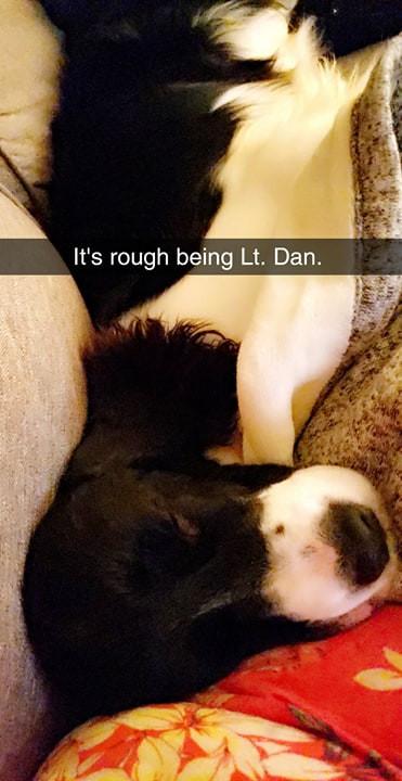 English Springer Spaniel puppy sleeping