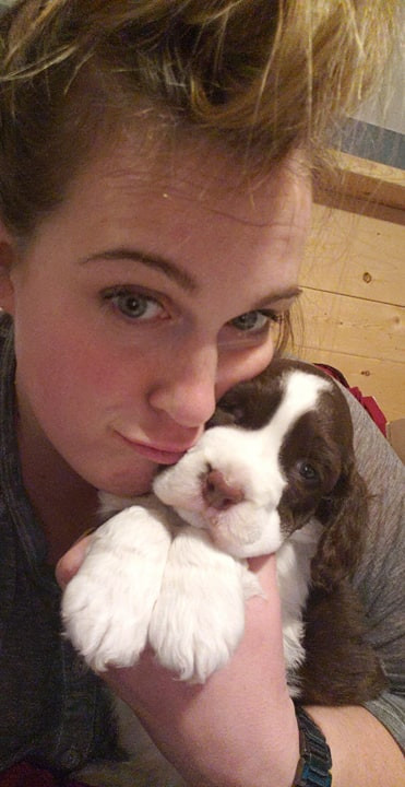 English Springer Spaniel puppy Switch and Krystal Hjort