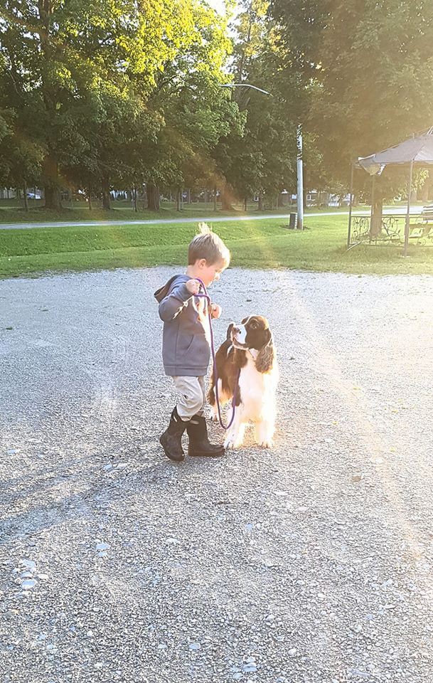 Young boy walking his English Springer Spaniel in West Grey, Ontario