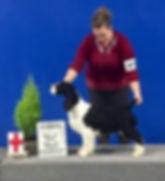 English Springer Spaniel Puppy Best of Breed Ontario