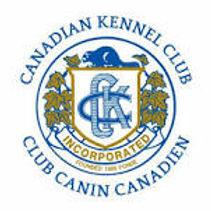 Canadian Kennel Club Member Trojh Englis
