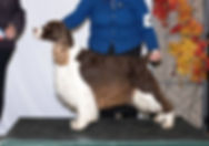 Canadian Champion Liver and White Male Ontario Canada