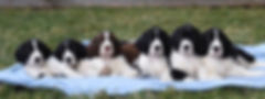 RussellStellaPuppies_edited.jpg