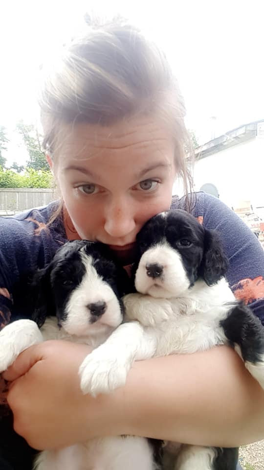 Krystal Hjort and a couple well bred English Springer Spaniel Puppies Ontario Canada